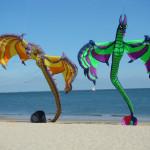 einige unserer Drachen