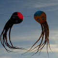 Oktopus Gallerie